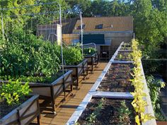 roof top farm