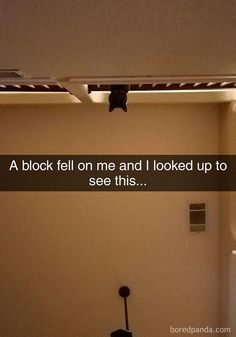 17+ Funny Cat Memes you will you will love #cat #kitty #memes #funny
