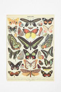 DIY Vintage Poster Frame, for my office botanical prints Diy Poster, Retro Poster, Vintage Butterfly, Butterfly Design, Butterfly Artwork, Butterfly Project, Butterfly Images, Butterfly Frame, Vintage Flowers