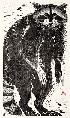 artistsanimals:  Title: Coon Artist: Holly Meade Medium: Wood block print Size: 12 x 22 Source: Jonathan Frost Gallery  and Shebeargallery