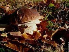 les cepes sous les sous-bois en automne