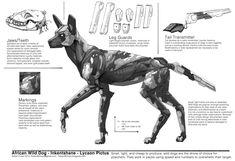 Big Five: African Wild Dog Breakdown by CrazyAsian1.deviantart.com on @deviantART