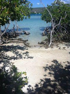 Manglares en Islas Guilligan, Puerto Rico 2013