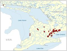 A map where Redside Dace minnow can be found in Ontario, Canada. Lake Huron, Lake Erie, Endangered Species, Durham, Ontario, Canada, Map, Animals, Animales