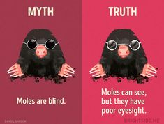 Myth and truth about mole blind Mole, Did You Know Facts, Family Memories, Survival, Ink, Drawings, Truths, Gardening, Teaching