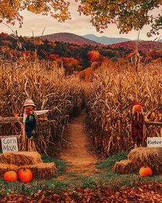 Tag the one person you'd feel the safest going into this haunted corn maze with! Fall Pictures, Fall Photos, Haunted Corn Maze, Autumn Scenes, Autumn Cozy, Autumn Fall, Autumn Leaves, Winter, Autumn Aesthetic