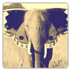 elephants elephants elephants!!