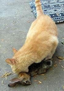 Dog Kills Cat