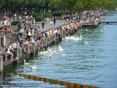 Quase uma prainha urbana, esse lago em Zurique.