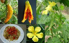 Bitter Melon Gohya Momordica Charantia Seeds