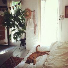 this looks cozy and fresh love how there is white everywhere but lots of shadows to make it cozier