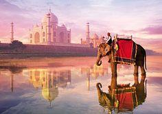 Elefant vor dem Taj Mahal