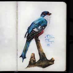 Blue Jay, Cuban, Bird, Animals, Animales, Animaux, Birds, Animal, Animais