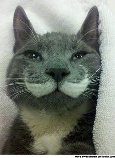 Cat, U drunk?