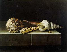 Unique Still Life Paintings | Still Life with Shells (Adriaen Coorte, 1697 oil on paper on wood ...