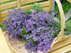 Lavender basket.