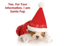 Prepare to Laugh: Hilarious Pet Holiday Memes - Pet360 Pet Parenting Simplified