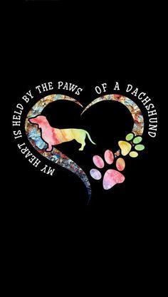 Dachshund Tattoo, Dachshund Quotes, Dachshund Art, Daschund, Dachshund Puppies, Dachshunds, Silly Dogs, Cute Dogs, Cute Baby Animals