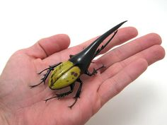 herc AR 4 Wesley Fleming Makes Amazing Bugs Out of Glass!