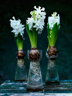 Hyacinth in bulb vases ~ Photo: Roland Persson Bulb Flowers, Love Flowers, Spring Flowers, White Flowers, Beautiful Flowers, Indoor Garden, Indoor Plants, Outdoor Gardens, Garden Bulbs