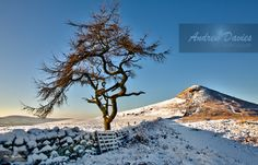 roseberry topping north yorkshire snow winter scene © www.andrew-davies.com 2014 , prints acrylics and canvas available now