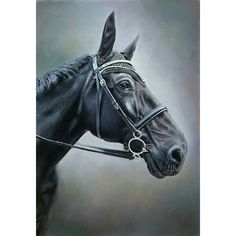 Another pastel commission completed. I do love painting horses, so majestic.   #horseportrait  #horse #horseandrider #horses #pony #equine #equestrian #horserace #horseriding #horserider #beauty #majestic #painting #pastel #pastels #beautiful #beautifull #dressage #mare #horselove #horsesofinstagram #jockey #horse