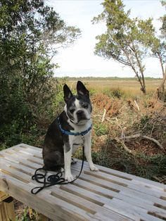 Wendell enjoying the view from the Coues Nature trail during our 3 mile hike.