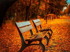Shop our best value Park Bench Frames on AliExpress. Check out more Park Bench Frames items in Furniture, Home & Garden! And don't miss out on limited deals on Park Bench Frames! Palette Design, Hd Photos, Stock Photos, Free Photos, Nature Photos, Autumn Photos, Fall Pics, Nature Hd, Autumn Nature