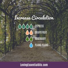 Cypress Diffuser Blends - Boost Mood & Breathe Easy! by Loving Essential Oils | Increase Circulation with cypress, grapefruit, rosemary and ylang ylang essential oil. Get more blends PLUS our free printable cheat sheet with the recipes, just visit our blog post. #lovingessentialoils #essentialoildiffuserblends #cypressdiffuserrecipes