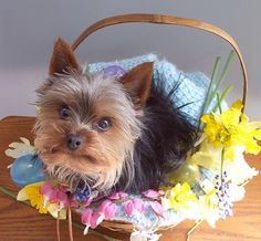 Searching to find the best dog harnesses for your pet? www.chic-dog-boutique.com has them!