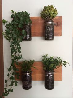 Ball Jar planters kitchen decorations plants ivy fern rustic