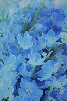 Aesthetic Themes, Blue Aesthetic, Lavender Flowers, Green Flowers, Aesthetic Iphone Wallpaper, Aesthetic Wallpapers, Blue Words, Cicely Mary Barker, Beautiful Flowers Wallpapers