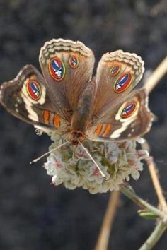 Butterfly...the wonders of Mother Nature.