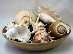 A coastal centerpiece - specimen seashells piled high in a bamboo bowl.   http://looseends.com/arts-n-crafts/level-pages/seashells/specimen.htm.