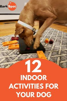 Rain, snow, and cold weather can be the worst nightmare for families with high-energy dogs. Without a walk, game of fetch, or trip to the park, all that pent-up energy can bubble over in frustrating ways. But when the weather gets bad, exercising outside isn't an option. Click here to learn fun indoor activities for your dog! #dogmom #doggo #dogtips #doghacks #dogactivities #doggames Fun Indoor Activities, Dog Activities, Big Dog Toys, Durable Dog Toys, Cool Dog Houses, Dog Collar Tags, Dog Games, Best Dog Training, Best Dog Food
