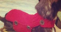 I decided to add another dog sweater to my repertoire. It's such a pain in the butt to get a pullover sweater on my twitchy jumpy little c... #DogSweater