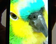 """""""O Grito do Bicho"""": O desaparecimento de um papagaio vai parar na just..."""
