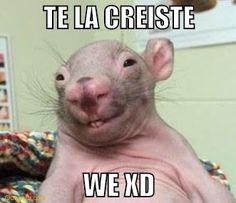 new Ideas for memes para contestar amor Funny Spanish Memes, Spanish Humor, Dankest Memes, Funny Memes, Jokes, 2017 Memes, Funny Koala, Funny Animals, Koro Sensei