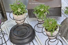 Salvaged Treasures...  Bed-Spring plant holders