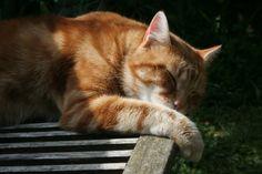 Sieste au calme, version chat