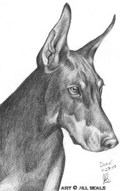 sketch doberman - Google Search