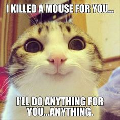 A Smiling Cat meme. Caption your own images or memes with our Meme Generator. Cute Animal Memes, Cute Funny Animals, Funny Animal Pictures, Funny Cute, Cute Cats, Funniest Animals, Cat Fun, Animal Fun, Meme Pictures