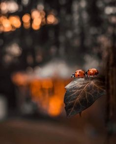 Thanks For Sharing, Beautiful Butterflies, Bokeh, Watercolor Art, Congratulations, Insects, Thankful, Nature, Instagram