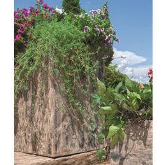 Rozměr v x š x h 800 x 500 x 500 mm, hmotnost 250 kg. Plants, Plant, Planets