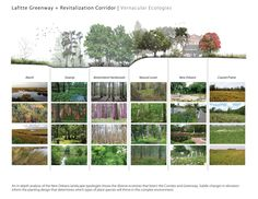 Lafitte Greenway + Revitalization Corridor | Design Workshop | 2013 ASLA Planning Award