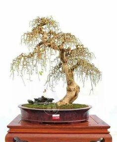 Artificial & Dried Flowers Aggressive Artificial Flower Plant Small Bonsai Simulation Red Apple Tree Peach Tree Orange Bonsai For Home Garden Decoration Low Price Home & Garden