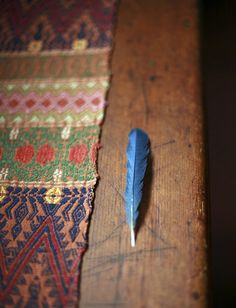 blaue Feder.