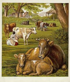 Lovely cows