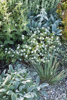 A # prefabricated # planting plan # for # 2 # m # for # the # dry # soil! Dry Garden, Gravel Garden, Garden Care, Garden Plants, Back Gardens, Outdoor Gardens, Mediterranean Garden Design, Design Jardin, Moon Garden