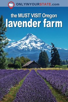 The Beautiful Lavender Farm Hiding In Plain Sight In Oregon That You Need To Visit - - Pick your own lavender at this gorgeous lavender farm located in the foothills of Mt Hood. Oregon Vacation, Oregon Road Trip, State Of Oregon, Oregon Trail, Backpacking Oregon, Oregon Coast Roadtrip, Crater Lake, Best Places To Travel, Places To Go